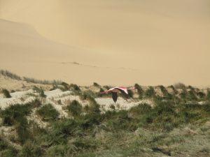 Walvis Bay dunes, Namibia